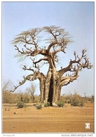 BURKINA FASO - LE BAOBAB étonnant Géant De La Savane - W-6 - Burkina Faso
