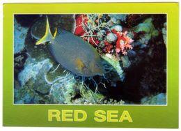 Fish Of Red Sea. VG. - Pesci E Crostacei