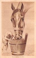 6402 01 CAVALLO CANE DOG HORSE - Horses
