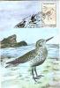 Maximum Cards, Romania, Set Of 10,  Animals, Birds,  Travellers Birds - Climbing Birds