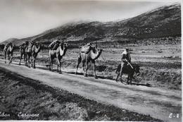 Liban Vers 1950 Caravane - Liban