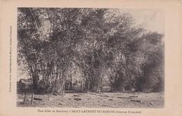 Une Allée De Bambous A St Laurent Du Maroni - Saint Laurent Du Maroni