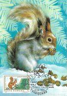 1995 - ANIMALS - RED SQUIRREL (Sciurus Vulgaris) - Maximumkarten (MC)