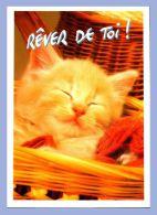 Carte Moderne - Parlez-moi D'Amour - Chats - PDA131. Rêver De Toi - Photo Vloo - Chats