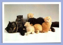 Carte Moderne - Arti Grafiche Ricordi - Chats - 1011. Cat Family - Photo F.Cicogna / G.Neri - Chats