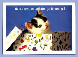 Carte Moderne - Agep Paris - Chats - 90. Ne Me Mets Pa En Boite, Je Déteste ça ! - Photo David De Lossy - Chats