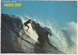 Australia NEW SOUTH WALES NSW HAWKS NEST Surfing Surf Board Riding North Coast 3918 Postcard Used 1983 - Newcastle
