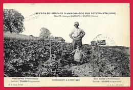 CPA Fleys - Exploitation De M. Georges Danguy - Effets Du Sulfate D'Ammoniaque Sur Les Betteraves - France