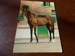B682  Cavallo Non Viaggiata - Caballos