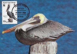 MAXIMUM CARD - MAXICARD - MAXIMUMKARTEN- CARTE MAXIMUM - BRITHIS VIRGIN ISLANDS - BROWN PELICAN - Pelicanus Occidentalis - Iles Vièrges Britanniques
