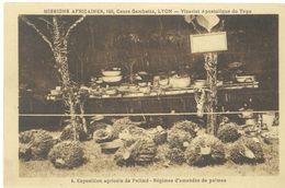 Exposition Agricole De PALIME - Régimes D' Amandes De Palmes   (103403) - Ciad