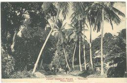 TRINIDAD - Under Coconut Palms   (103405) - Trinidad