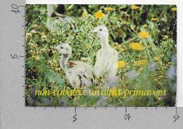CARTOLINA NV ITALIA - PALIANO (FR) - La Selva Parco Uccelli - Nandù - Rhea Americana - 10 X 15 - Frosinone