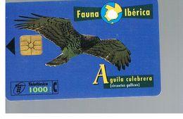 SPAGNA (SPAIN) - TELEFONICA  (CHIP) -  FAUNA IBERICA: CIRCAETUS GALLICUS        - USED - RIF. 10007 - Aquile & Rapaci Diurni