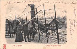 ¤¤  -   PARIS   -  Le Jardin D'Acclimatation   -   Les Antilopes    -   ¤¤ - Arrondissement: 16
