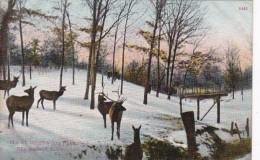 Iowa Des Moines Elk At Greenwood Park - Des Moines
