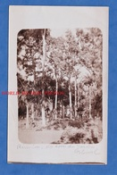 CPA Photo - REUNION - Un Coin Du Jardin Colonial - 1920 / 1930 - Arbre Tree - Non Classés