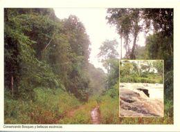 Paraguay - Reservas Naturales Privadas (RNP) - Saltos Des Arroyo Guazú - Fundación Moises Bertoni - 5430 - Paraguay