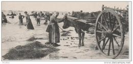 De Blainville à Coutainville-La Pêche Au Varech à La Marée Montante. - France