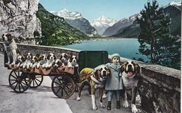 Fluelen - St Bernhard Dog Cart , Attelage De Chien - UR Uri
