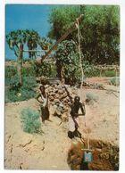 """DJIBOUTI--1997--Système D'irrigation """"Puits à Balancier"""" (animée) - Dschibuti"""