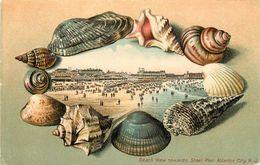 ATLANTIC CITY N.J. - The Beach View, Carte 1900 Illustrée. - Atlantic City