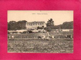 78 Yvelines, Limay, Château Des Celestins, Animée, Vaches, Vigne - Limay