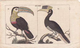 Birds. Old Colored Lithography. - Litografia