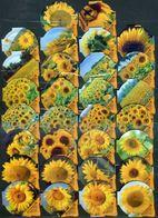 30 KRD Schweiz - Sonnenblumen - 1357 B - Riegel - Milk Tops (Milk Lids)