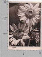 CARTOLINA VG ITALIA - GIRASOLE - CECAMI 883 - 10 X 15 - ANN. 1941 - Fleurs