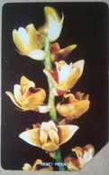 10 Units Orchids - Sierra Leone