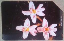 Orchids 25 Units - Sierra Leone