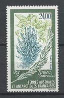TAAF1999  N° 244 ** Neuf MNH Superbe Cote 12 € Flore Antarctique Festuca Contracta Flora - Ongebruikt