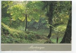 Martinique : Fougères Arborescentes Route De La Trace - Other