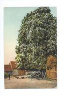 Ferme Poules Et Charrette 1909 - Fermes
