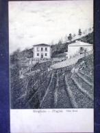 TOSCANA -FIRENZE -BIVIGLIANO -F.P. LOTTO N°183 - Firenze