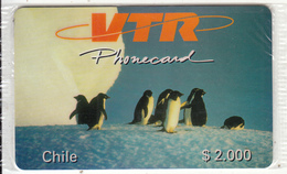 CHILE - Pinguins, VTR Prepaid Card $2000, Tirage 1000, Mint - Chile