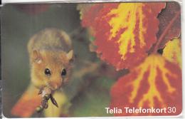 SWEDEN(chip) - Animal, 01/96, Mint - Sweden