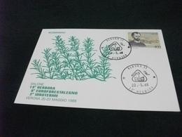 ROSMARINO  VERONA 1988  13° HERBORA - Plantes Médicinales