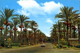 Egypt- Alexandria - Palmtrees At Montazah Gardens - Alexandria
