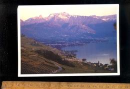 VEVEY MONTREUX : Vue Panoramique Lac Léman Le Lavaux  Les Vignes - VD Vaud
