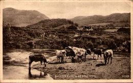 Breiddin Hills, Near Welshpool - Montgomeryshire