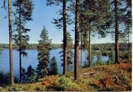 Suomi Finland - Formato Grande Non Viaggiata – E 4 - Cartoline