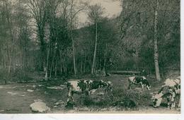 Environs D'AVALLON, ( Troupeau De Vaches Aux ) Bords Du Cousin - Bon état - France