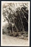 LA REUNION: Belle Vue Sur La Route De St. Gilles, Lieu Dit Les Filaos. RARE Carte Photo Neuve - Autres