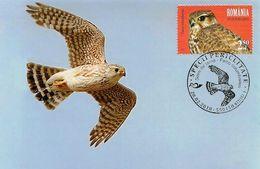 2018 - FALCON BIRD - MERLIN (Falco Columbarius) - Maximumkarten (MC)