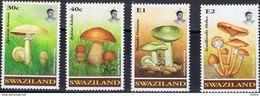 SWAZILAND - Agaricus  Arvensis - Boletus Edulis - Russula Virescens - Armillarella Mellea - Paddestoelen