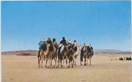 AFRIQUE NORD,MAGHREB,AFRICA,ALGER IE,SAHARA OUEST,TOUAREG DU DESERT,METIER,HOGGAR,TOUA REG - Algeria