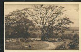 Carte Neuve : N°23: Sur Les Bords De La Kakitumba (Edition: Jos. Dardenne. Série N° 1 Luxe) - Rwanda