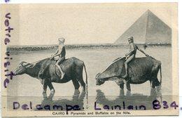 - 424 - Le Caire - CAIRO - PYRAMIDS And Buffalos, On The Nile, épaisse, Cliché Peu Courant,  TTBE, Scans.. - Cairo